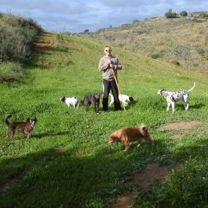 dogs-in-andalusia