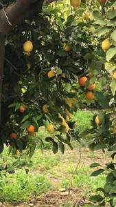 fruits-in-andalusia