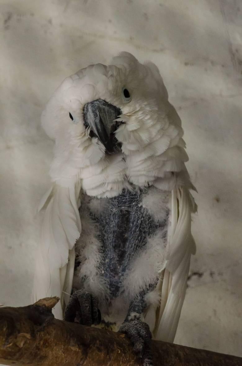 animal-photo4
